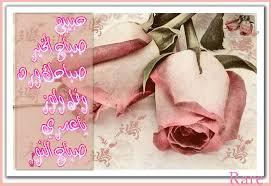 بالصور صباح الورد حبيبتي , تحية الصباح للعشاق 3266 8
