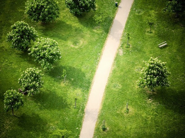 صورة خلفية خضراء , اجمل خلفيات خضراء من الطبيعه