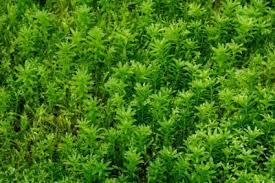 بالصور خلفية خضراء , اجمل خلفيات خضراء من الطبيعه 1734 10