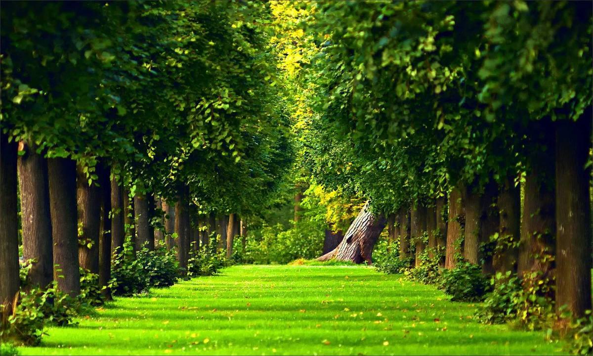 بالصور خلفية خضراء , اجمل خلفيات خضراء من الطبيعه 1734 11