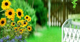 صور خلفية خضراء , اجمل خلفيات خضراء من الطبيعه