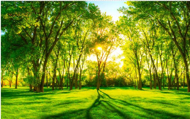 بالصور خلفية خضراء , اجمل خلفيات خضراء من الطبيعه 1734 3