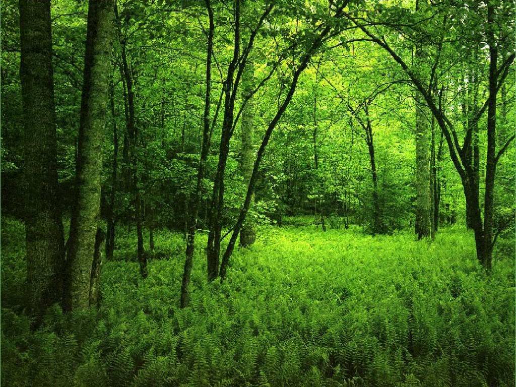 بالصور خلفية خضراء , اجمل خلفيات خضراء من الطبيعه 1734 6
