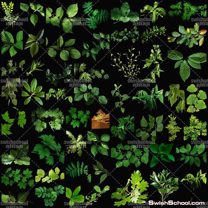 بالصور خلفية خضراء , اجمل خلفيات خضراء من الطبيعه 1734 7