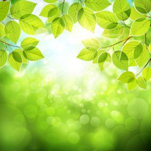 بالصور خلفية خضراء , اجمل خلفيات خضراء من الطبيعه 1734 8