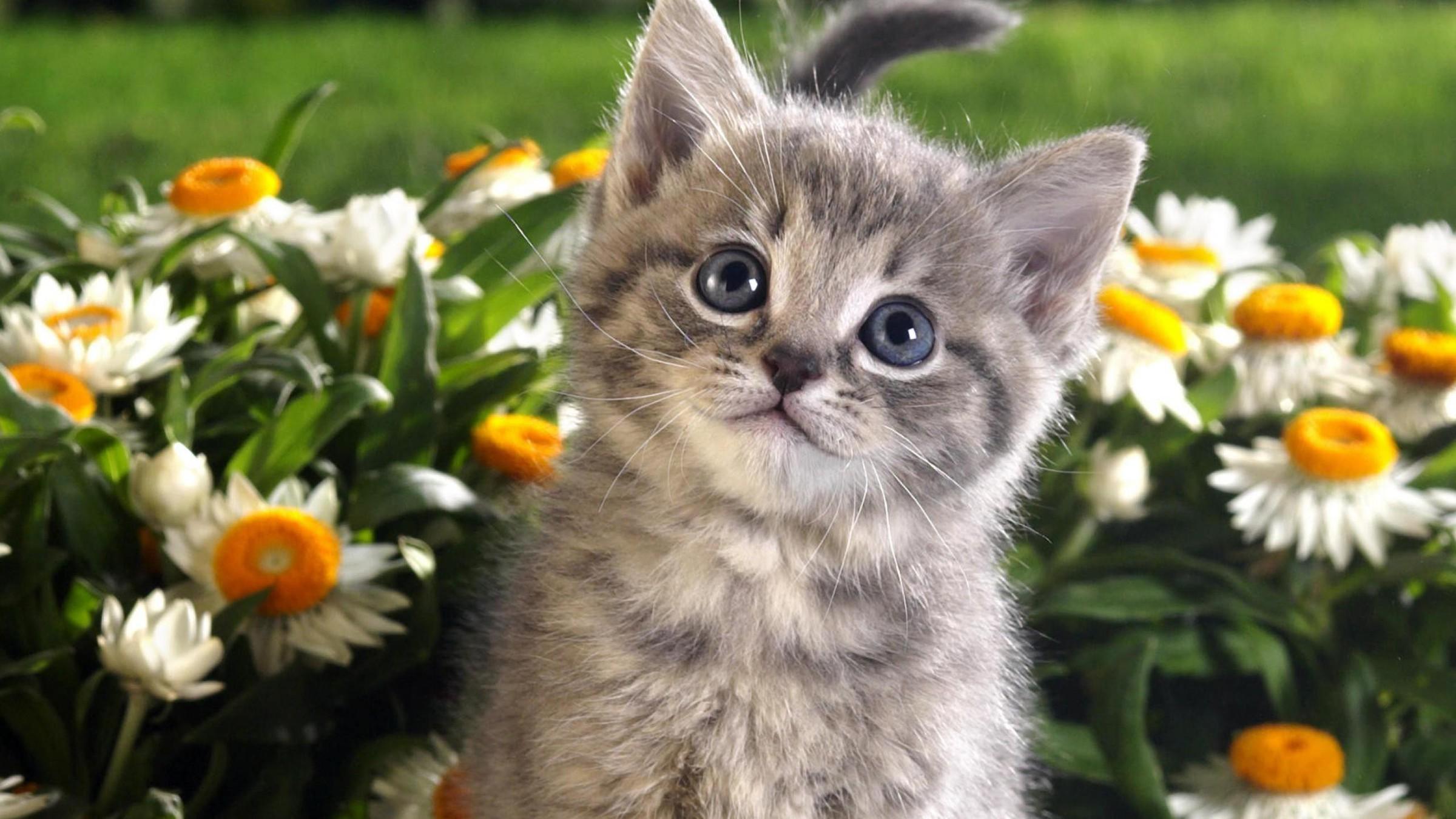 بالصور اجمل الصور للقطط في العالم , اجمل اشكال القطط و الوانها 1784 12