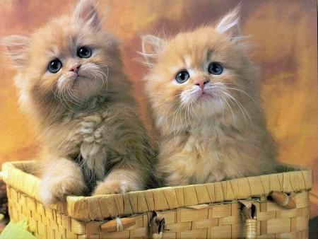 بالصور اجمل الصور للقطط في العالم , اجمل اشكال القطط و الوانها 1784 2