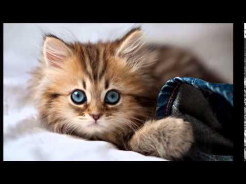 بالصور اجمل الصور للقطط في العالم , اجمل اشكال القطط و الوانها 1784 4