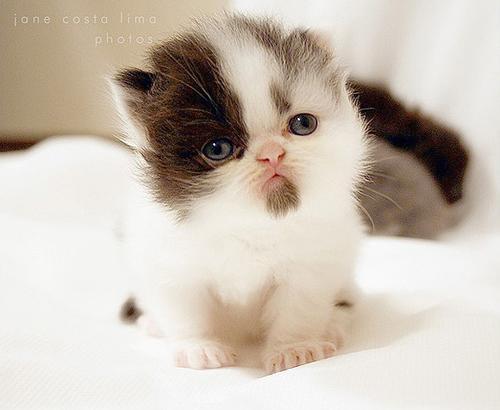 بالصور اجمل الصور للقطط في العالم , اجمل اشكال القطط و الوانها 1784 6