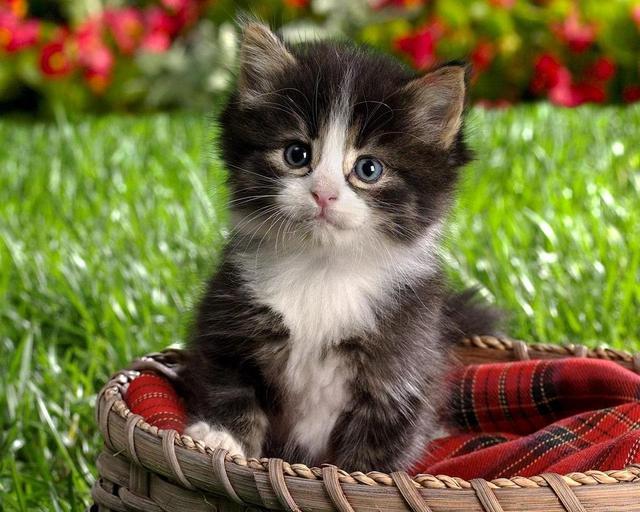 بالصور اجمل الصور للقطط في العالم , اجمل اشكال القطط و الوانها 1784 8