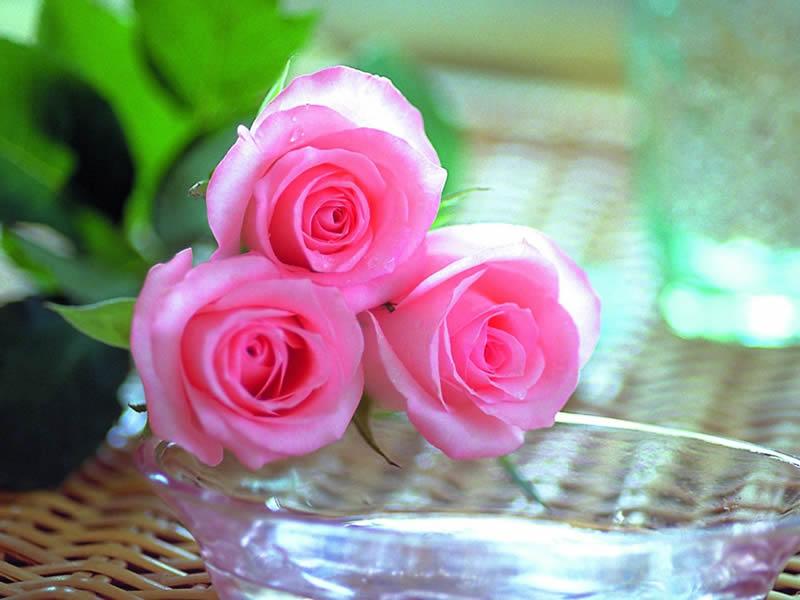 صورة صور ورد جميل , اجمل ورد حلو
