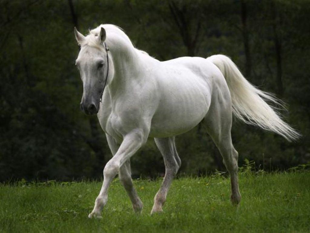 صور صور حصان , اجمل صور خيول