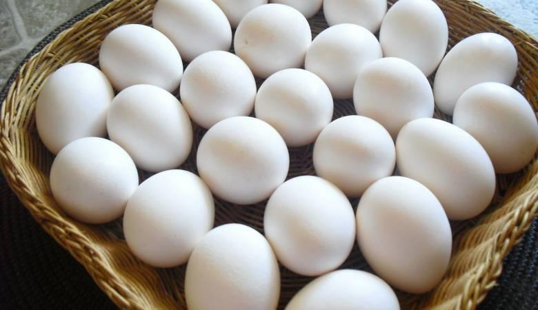 صورة تفسير رؤية البيض في المنام للمتزوجة , رؤية المتزوجة البيض في الحلم
