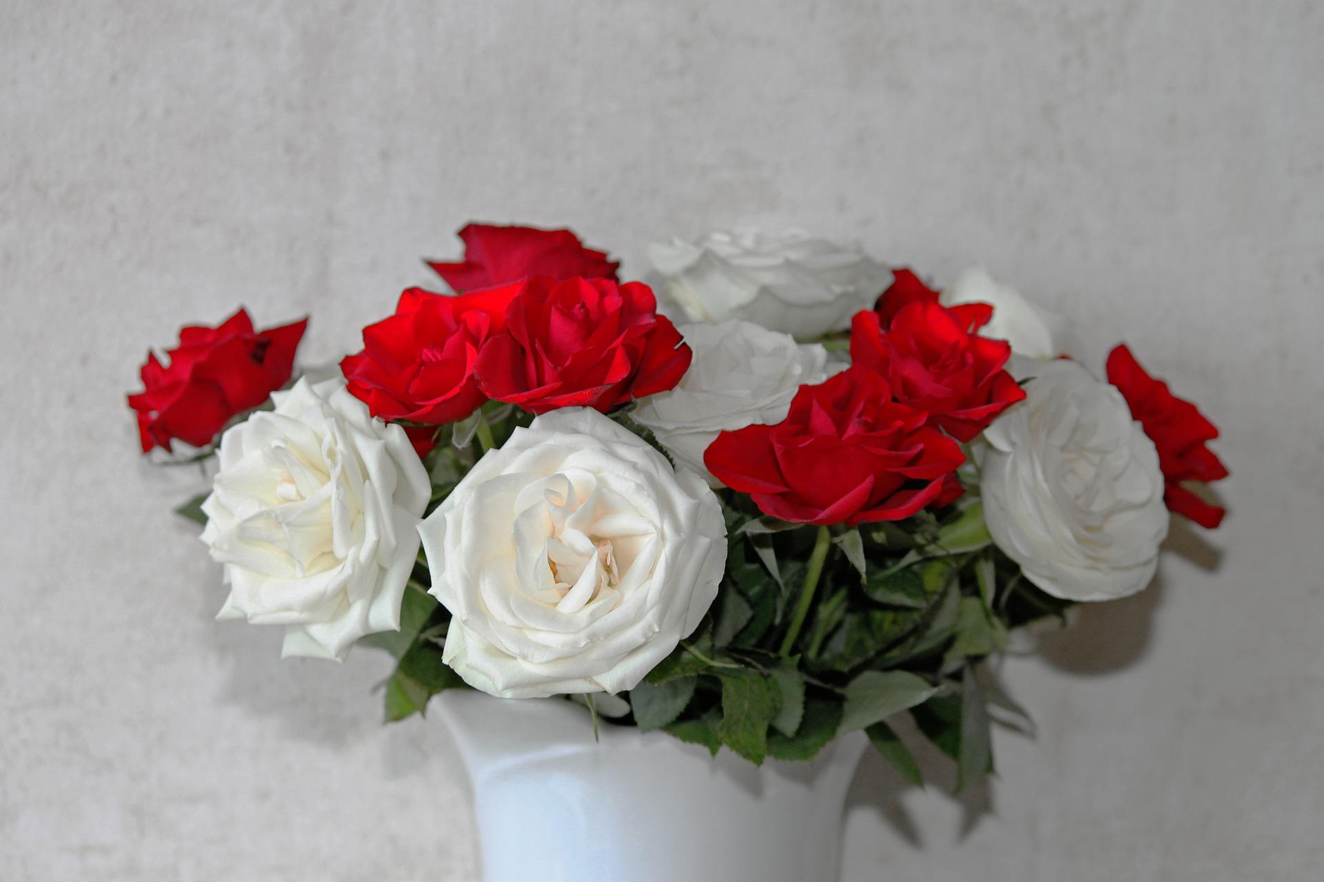 بالصور ورود الحب , اجمل الورود للحب 2389 10