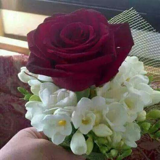 بالصور ورود الحب , اجمل الورود للحب 2389 5