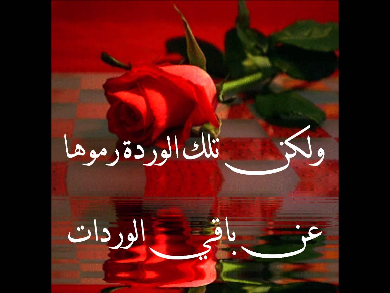 بالصور ورود الحب , اجمل الورود للحب 2389 6