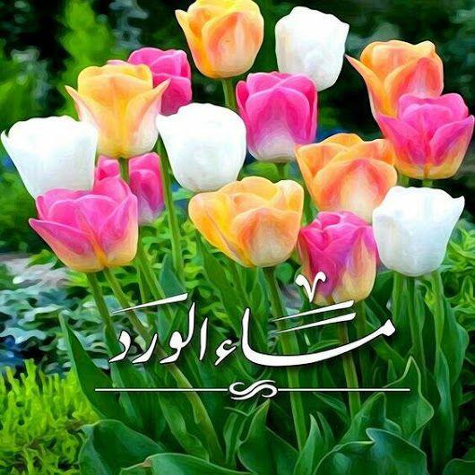 بالصور مساء الورد حبيبي , اجمل مسا للحبيب 2392 12