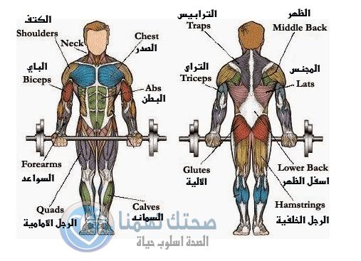صورة تمارين كمال اجسام , افضل التمارين الرياضية