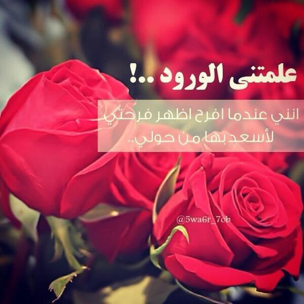 بالصور كلمات عن الورد , اجمل ما قيل عن الورد 2467 4