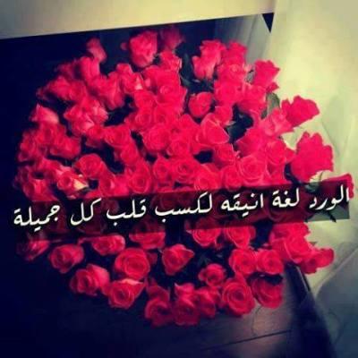 صورة كلمات عن الورد , اجمل ما قيل عن الورد