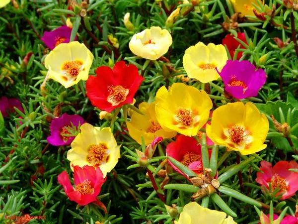 بالصور اجمل الورود في العالم , صور اجمل ورد 2481 11