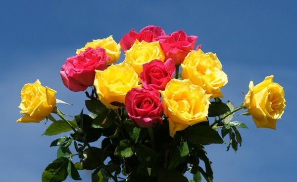 صوره اجمل الورود في العالم , صور اجمل ورد