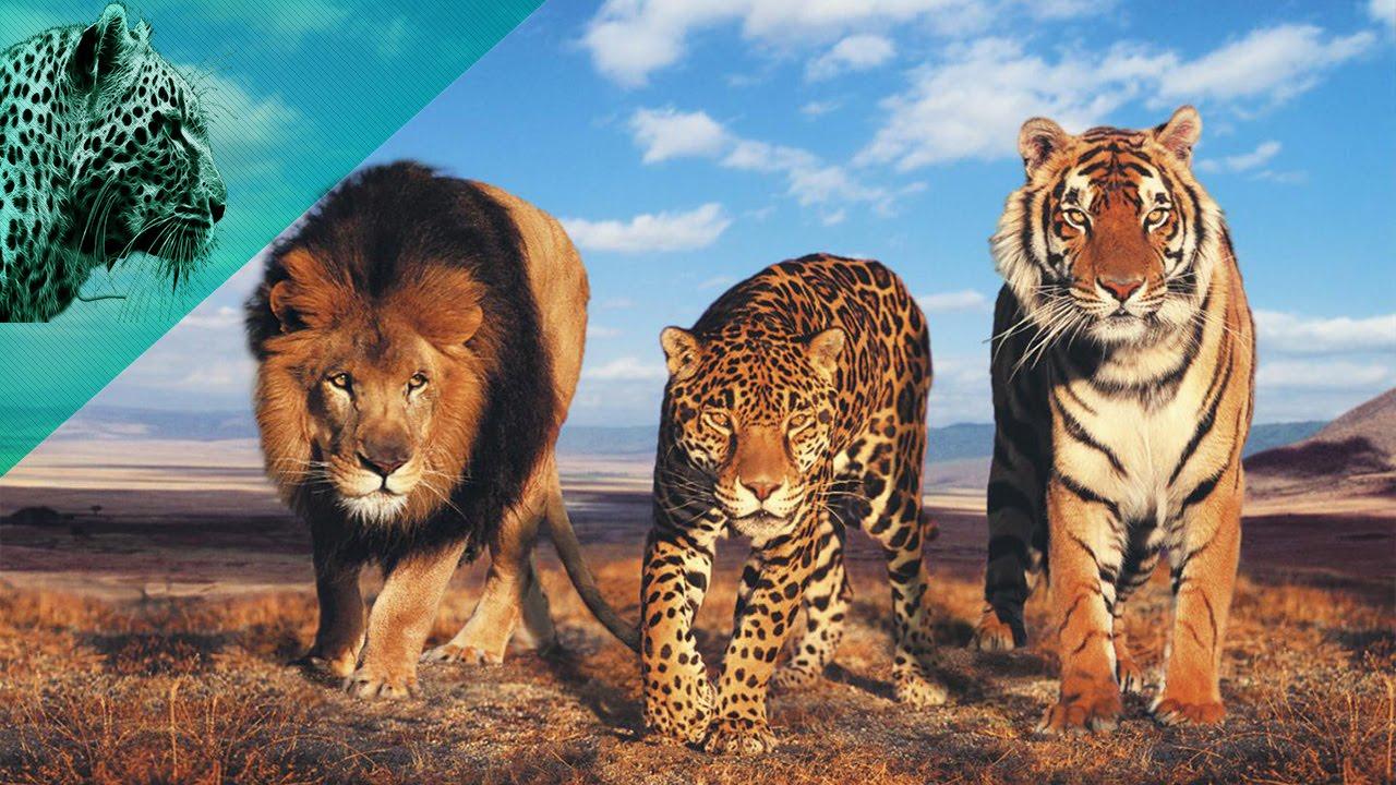 بالصور اسرع حيوان في العالم , من هو اسرع حيوان بالعالم 2506 1