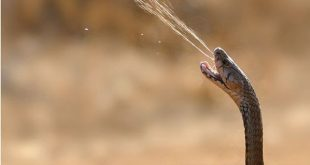 رؤية الافعى في المنام , ماهو تفسير حلم الثعبان