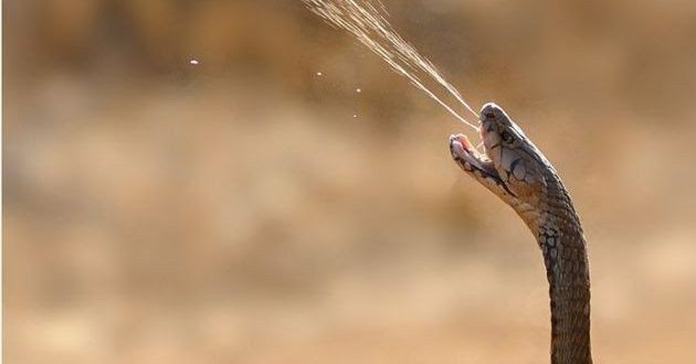 صورة رؤية الافعى في المنام , ماهو تفسير حلم الثعبان