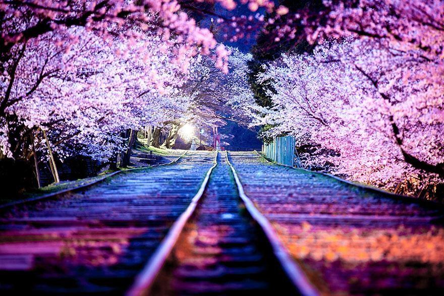 صور اجمل صور الطبيعة , افضل خلفيات للبيئه الساحره