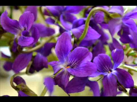 بالصور صور اجمل ورد , اروع صور للورد 1193 5