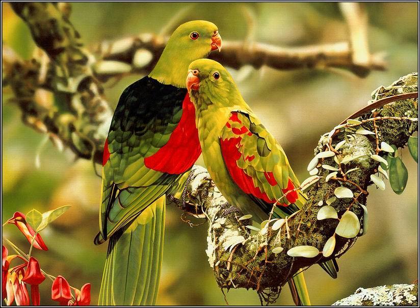 صورة اجمل الطيور في العالم , اروع طيور زينه فى العالم