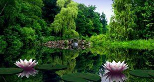 صوره خلفيات طبيعة , اجمل الخلفيات الطبيعية