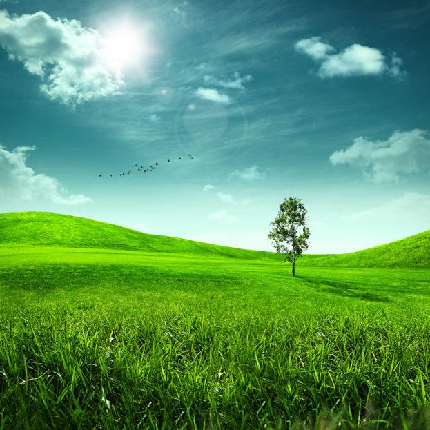 بالصور خلفيات طبيعة , اجمل الخلفيات الطبيعية 2653 6