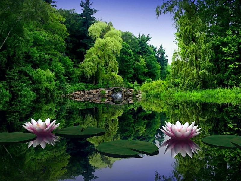 صور خلفيات طبيعة , اجمل الخلفيات الطبيعية