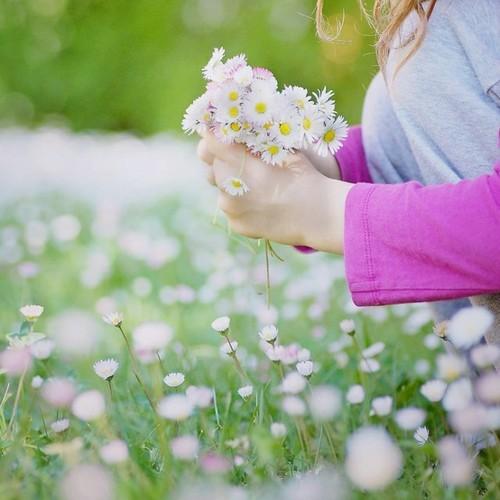 صورة صور زهور , بطاقات ورد ساحره