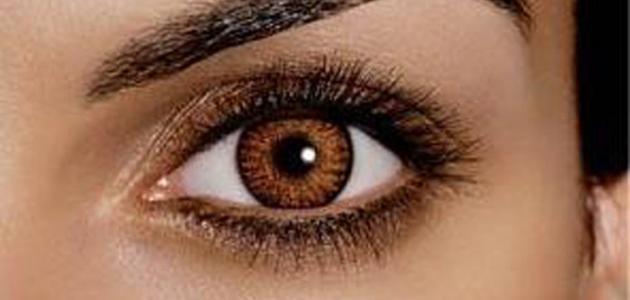 بالصور صور عيون عسليه , خلفيات اجمل لون عين عسلي 3078 3