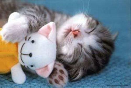 بالصور اجمل صور قطط , خلفيات هره كيووووووت 3086 10