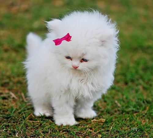 بالصور اجمل صور قطط , خلفيات هره كيووووووت 3086 11