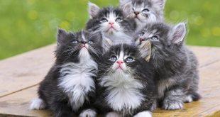 بالصور اجمل صور قطط , خلفيات هره كيووووووت 3086 12 310x165