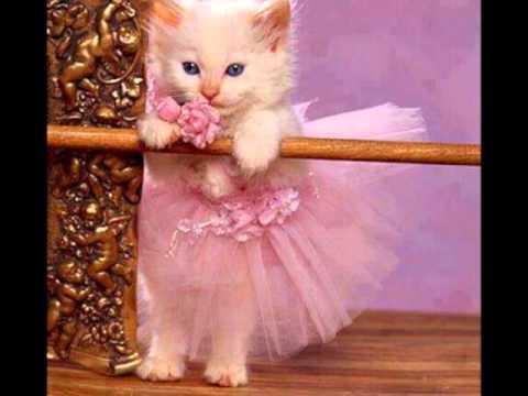 بالصور اجمل صور قطط , خلفيات هره كيووووووت 3086 3