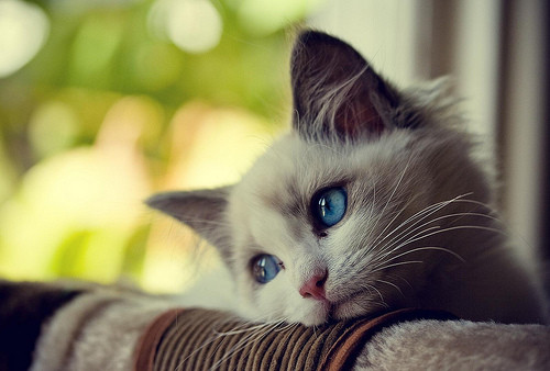 بالصور اجمل صور قطط , خلفيات هره كيووووووت 3086 5