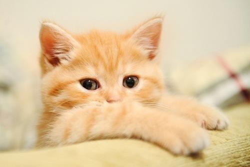بالصور اجمل صور قطط , خلفيات هره كيووووووت 3086 6