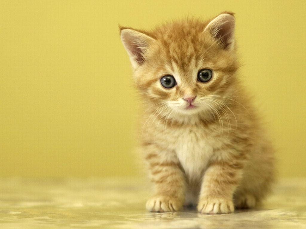 بالصور اجمل صور قطط , خلفيات هره كيووووووت 3086 7
