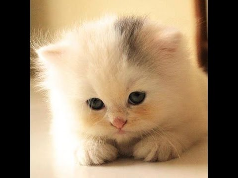بالصور اجمل صور قطط , خلفيات هره كيووووووت 3086 8