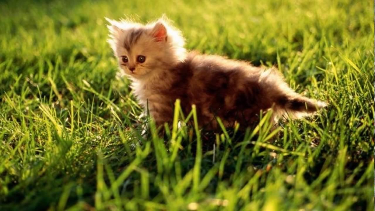 بالصور اجمل صور قطط , خلفيات هره كيووووووت 3086 9