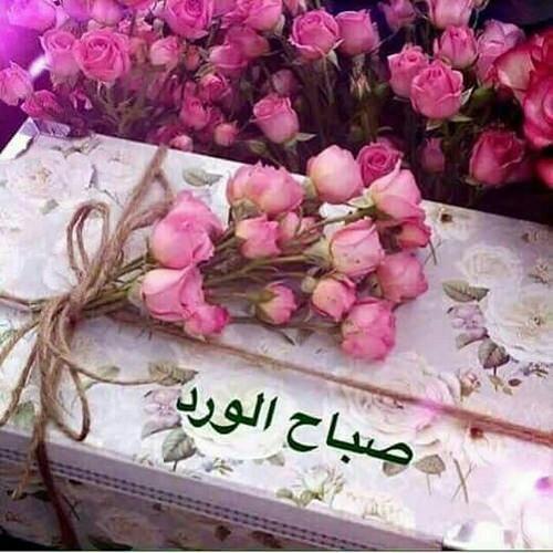 صورة صباح الورد للورد , احلى تحيه صباحيه بلون الورود