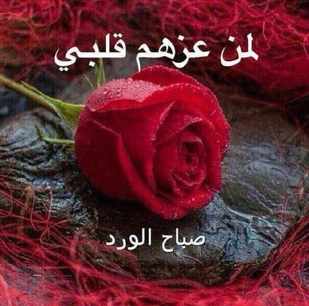 بالصور صباح الورد للورد , احلى تحيه صباحيه بلون الورود 3223 11