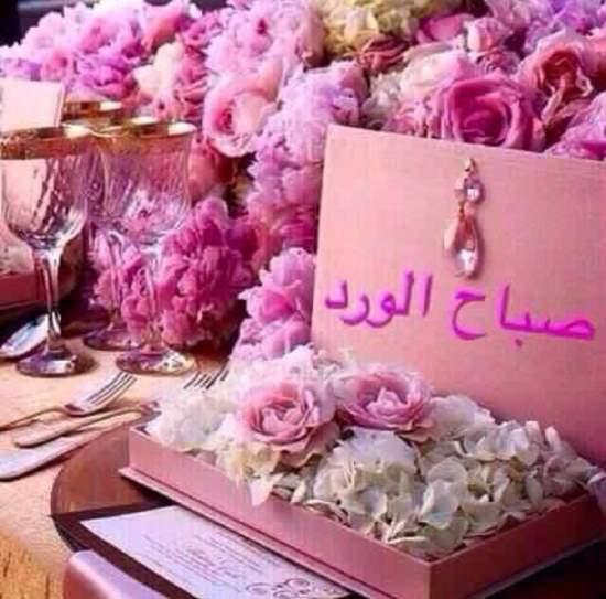 بالصور صباح الورد للورد , احلى تحيه صباحيه بلون الورود 3223 2
