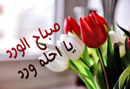 بالصور صباح الورد للورد , احلى تحيه صباحيه بلون الورود 3223 4